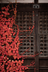 red leaves on wall of japanese temple