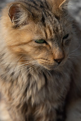 portrait of a stray cat