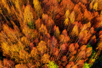 Aerial view of autumn forest . Amazing landscape , trees with red and orange leaves in day, National Park Livaditis Xanthi, Greece