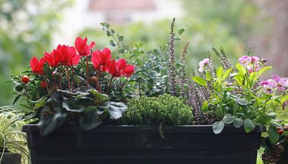 Poster Bloemen Jardinière de plantes d'automne