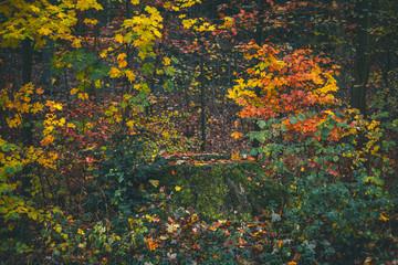 Baumstumpf im Herbst