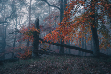Nebel im Laubwald