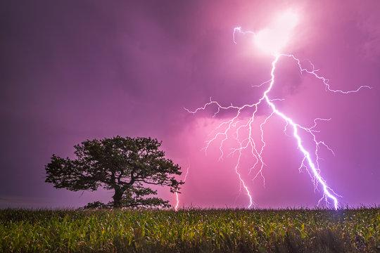 Old oak and lightning bolt