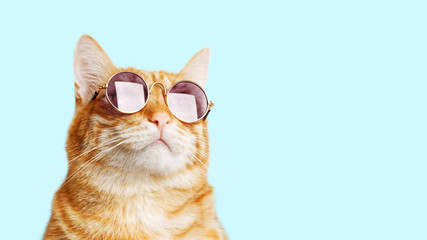 Closeup portrait of funny ginger cat wearing sunglasses isolated on light cyan. Copyspace. Wall mural