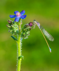 Printed roller blinds Butterfly Macro shots, Beautiful nature scene damselfly.
