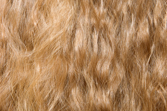 Close-up view of Natural Light Background of Loose Shiny Curly Hair. Healthy Long Shiny Wavy Hair Texture. Selective soft focus.