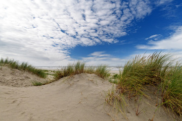 Wall Mural - Dune beach on the North Sea island Langeoog in Germany with blue sky and clouds on a beautiful summer day