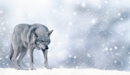 Fotobehang Wolf Portrait of fabulous grinning gray wolf (canis lupus) ready to attack on winter snow background with snowflakes. Fantasy christmas card with snowy fairy tale landscape and predator animal. Copy space.