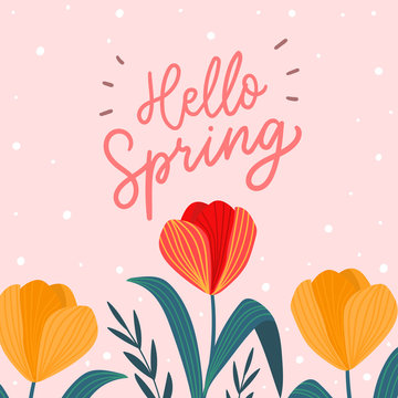 Hello spring words with tulips flowers for print, card, poster. Seasonal spring background template.