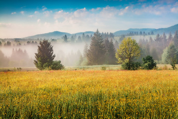 Wall Mural - Colorful summer scene of foggy Carpathian mountains. Splendid morning view of Borzhava range, Transcarpathian, Ukraine, Europe. Beauty of nature concept background..