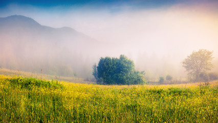 Wall Mural - Foggy morning scene in a mountain valley. Fresh grass and flowers in a morning dew. Sunrise in Carpathians, Ukraine, Europe. Beauty of nature concept background.