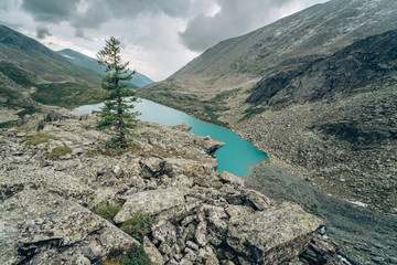 Wall Mural - Wild russian nature. Beautiful landscape with emerald lake in the mountains. Akchan Lake with clear turquoise water. Traveling in the Altai Republic. Alone tree on the foregroung. Siberian reserve.