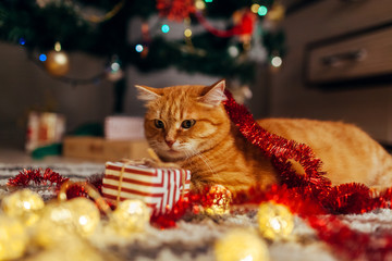 Foto op Aluminium Kat Ginger cat playing with garland and gift box under Christmas tree. Christmas and New year concept