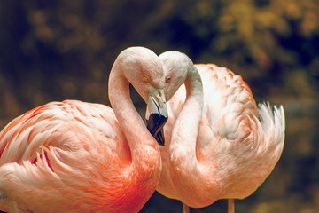 Keuken foto achterwand Flamingo pink flamingo in zoo