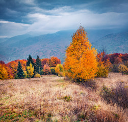 Photo sur Aluminium Bleu jean Wonderful autumn scene of mountain valley. Gloomy morning view of Carpathian mountains, Kvasy village location, Ukraine, Europe. Beauty of nature concept background.