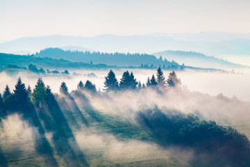 Wall Mural - Foggy summer view of Carpathian mountains. Impressive morning scene of Borzhava mountain ridge, Transcarpathian, Ukraine, Europe. Beauty of nature concept background. Instagram toning.