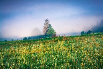 Wall Mural - Dramatic summer scene of foggy Carpathian mountains. Picturesque morning view of Borzhava mountain  range, Transcarpathian, Ukraine, Europe. Beauty of nature concept background.