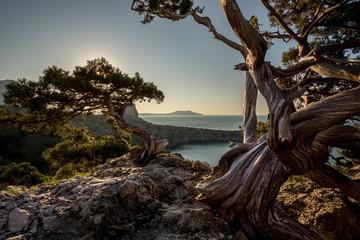 In de dag Bomen juniper grove at dawn Mountains of Crimea