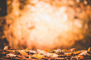 Tree trunk in the forest, surrounds autumn leaves, Autumn picture in the forest, city park, background concept Baanakkerspark, dreamy, idyllic, brown, orange and yellow colors, space for text, copy