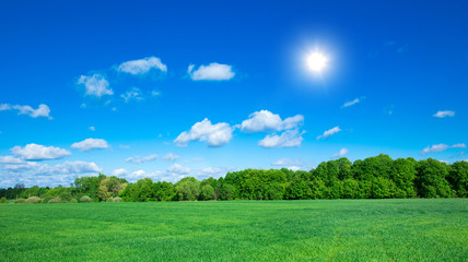 Fototapete - field of grass and perfect sky