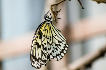 detailed pic of a beautiful butterfly on a tree in a forest showing black, yellow and white wings.  I