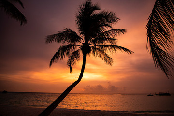 Silhouette of a pam tree on beach at sunset, Maldives