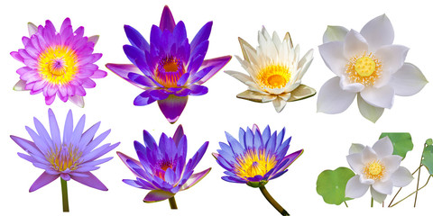 Garden Poster Lotus flower set of lotus flowers