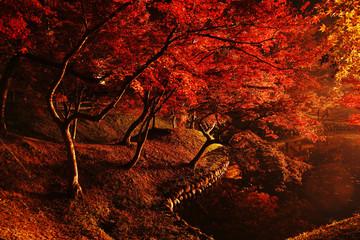 Marron chocolat ライトアップされた紅葉が美しいゆうじゃく公園