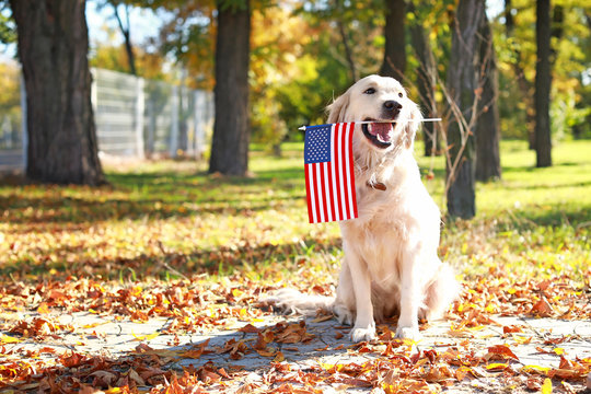 Cute dog with national flag of USA in park. Memorial Day celebration