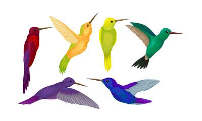 Hummingbird colibri Vector Set. Tropical Birds Collection