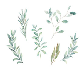 Watercolor floral greenery set with eucalyptus, rosemary and olive branch on white background. Hand drawn isolated  illustration. Wedding design