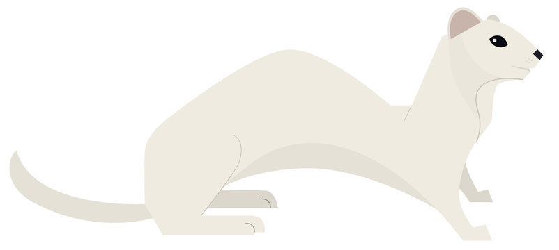 Wild animals Vector illustration Least weasel Isolated object