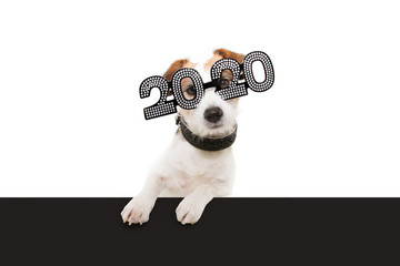 """dog new year with paws over black edge. wearing  glasses with the inscription """"2020"""", on a white background"""