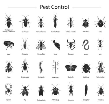 Bug of insect vector black set icon.Vector illustration insect beetle. Isolated black icon bug and fly beetle.