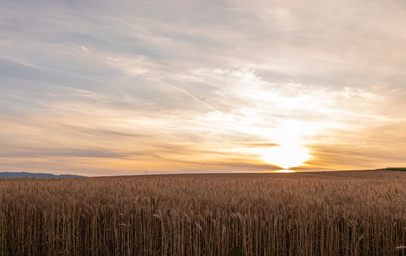 Sunset. Field. Wheat. Crop. Sun. Sky
