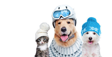Poster Glisse hiver Pets wearing winter accessories isolated on white