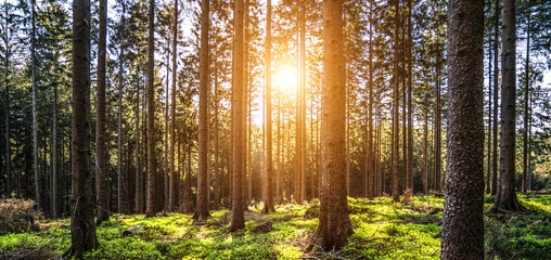 Keuken foto achterwand Grijze traf. Silent Forest in spring with beautiful bright sun rays
