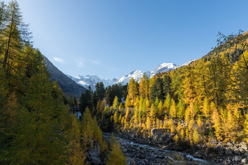Door stickers Road in forest Morteratsch station with view to Morteratsch glacier valley in autumn with golden larch forest and blue sky