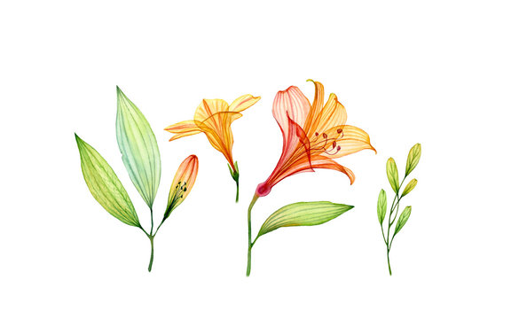 Watercolor set of transparent yellow hibiscus flower, lily and leaves. Colourful tropical collection isolated on white. Botanical floral illustration for wedding design, packaging, advertising