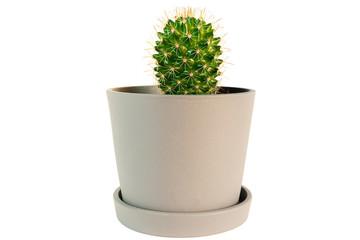 Photo sur Aluminium Cactus small potted cactus plant isolated on white background