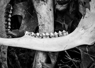 Deer Bones