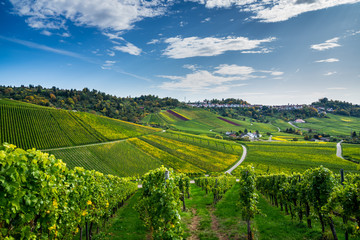 Germany, Beautiful urban area of stuttgart district rotenberg, a city on a hill, surrounded by endless colorful vineyards nature landscape in autumn