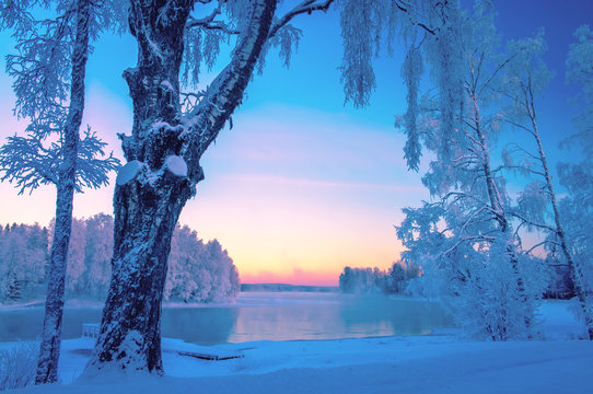 Cold winter day landscape with snowy trees. Photo from Kuhmo, Finland. Heavy snow view.