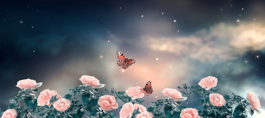 Fantasy fabulous panoramic banner background of magical night sky with shining stars, clouds and delicate romantic pink rose flowers garden and flying peacock eye butterflies. Idyllic tender scene.