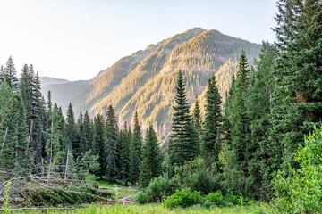 Coniferous pine trees on trail to Ice lake in Silverton, Colorado in August 2019 summer morning sunrise green valley and peak