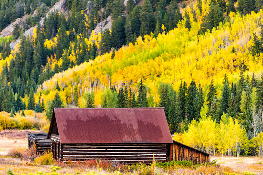 Castle Creek road wooden house cabin building in Ashcroft ghost town with yellow foliage aspen trees in Colorado rocky mountains autumn fall