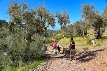 Wandern in der Serra de Tramuntana / Mallorca