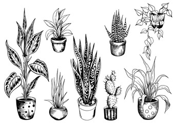 Set of potted house plants. Sketch of indoor flowerpots. Hand drawn black and white vector illustration.