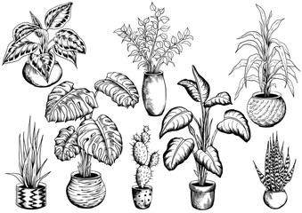 Collection of sketchy houseplants. Hand drawn black and white vector illustration.