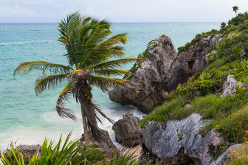 Palm tree and boulders on beach in Tulum, Mexico.
